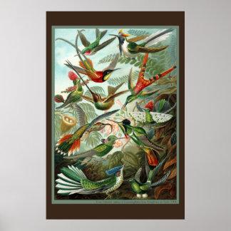 Impresión del colibrí póster