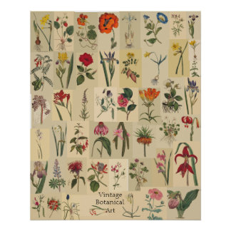 Impresión del collage de Botanicals del vintage de