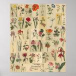 Impresión del collage de Botanicals del vintage de Impresiones