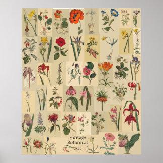 Impresión del collage de Botanicals del vintage de Póster