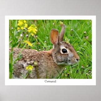 Impresión del conejo de conejo de rabo blanco posters