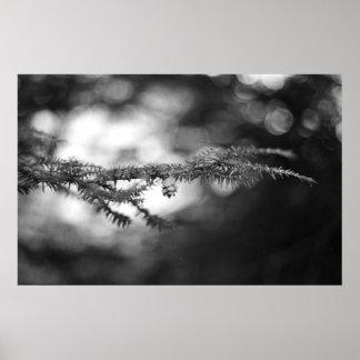 Impresión del cono del pino de la esperanza de la  póster