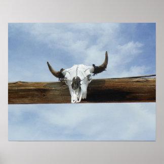 Impresión del cráneo de la vaca póster
