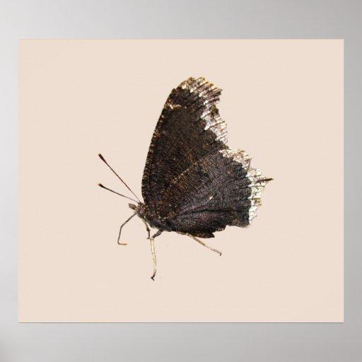 Impresión del ~ de la mariposa de capa de luto poster