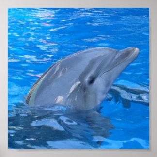 Impresión del delfín de Bottlenose Póster