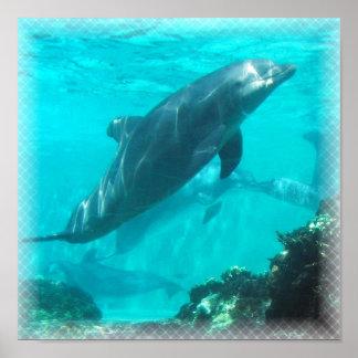 Impresión del delfín de la natación póster
