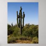 Impresión del desierto de Arizona Posters