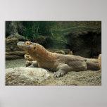 Impresión del dragón de Komodo Impresiones