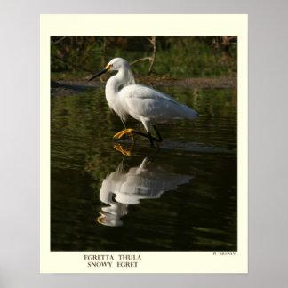 Impresión del Egret nevado