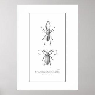 Impresión del ejemplo del escarabajo del vintage póster
