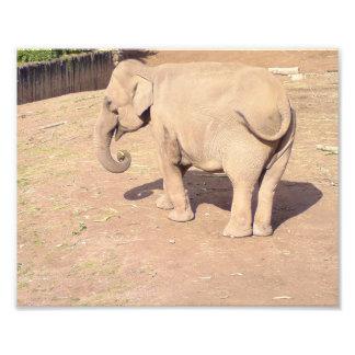 Impresión del elefante del bebé fotografía