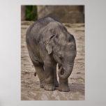 Impresión del elefante del bebé impresiones