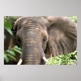 Impresión del elefante impresiones