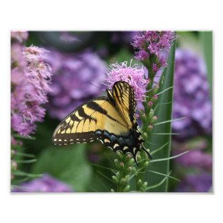 Impresión del este de la foto de Swallowtail del Fotografía