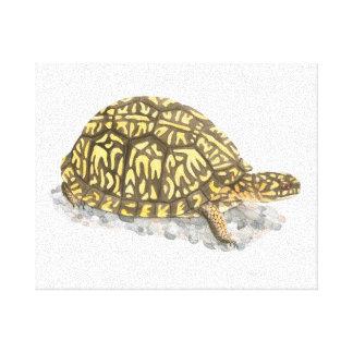 Impresión del este de la lona de la tortuga de caj lona envuelta para galerías
