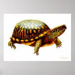 Impresión del este de la tortuga de caja póster