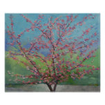 Impresión del este del árbol de Redbud Posters