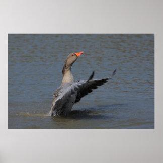 Impresión del ganso silvestre que conduce posters