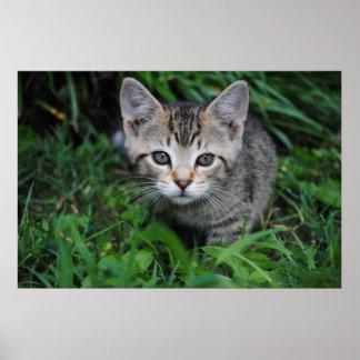 Impresión del gatito impresiones