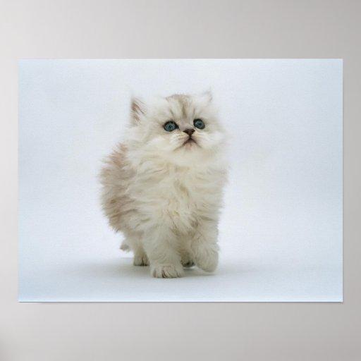 Impresión del gato impresiones