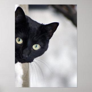 Impresión del gato negro póster