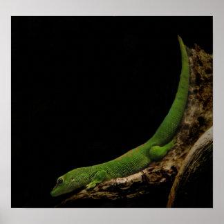 impresión del gecko del día de Madagascar