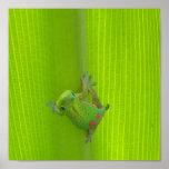 Impresión del Gecko Impresiones
