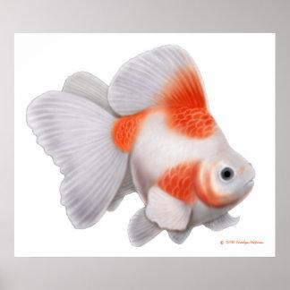 Impresión del Goldfish de la cola de milano de Ryu Posters
