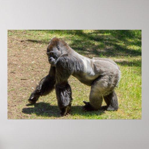 Impresión del gorila del Silverback Póster