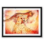 Impresión del guepardo 5x7 fotografias