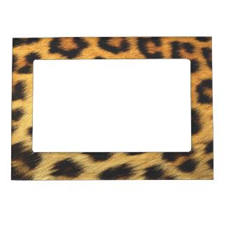 Impresión del guepardo foto de imanes