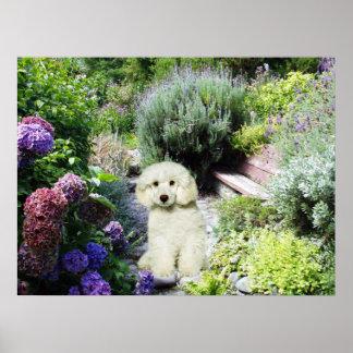 Impresión del jardín del caniche impresiones
