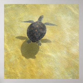 Impresión del juego de sombra de la tortuga de mar poster