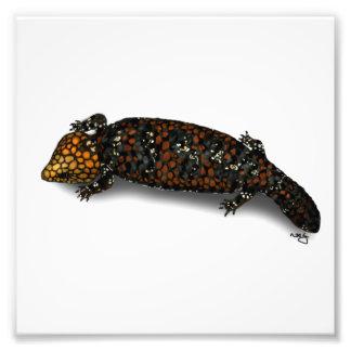 Impresión del lagarto de Goldfields Shingleback Fotos