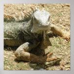 Impresión del lagarto de la iguana impresiones