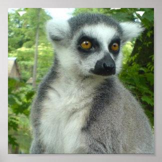 Impresión del Lemur de Madagascar Impresiones