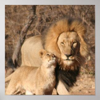 Impresión del león y de Cub de león Posters