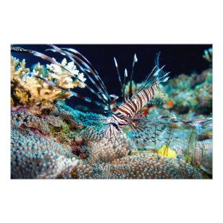 Impresión del Lionfish Cojinete