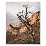 Impresión del Mesa Verde Impresiones Fotográficas