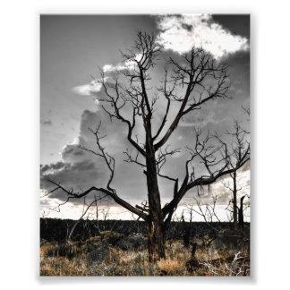 Impresión del Mesa Verde Fotografia