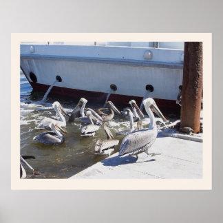 Impresión del muelle del puerto de los pelícanos posters