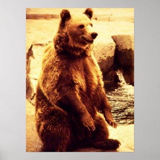 impresión del oso grizzly póster