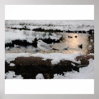 Impresión del pájaro del invierno póster