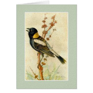 Impresión del pájaro del vintage - Bobolink Tarjeta Pequeña