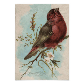 Impresión del pájaro del vintage impresiones