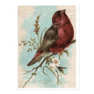 Impresión del pájaro del vintage postal