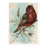 Impresión del pájaro del vintage postales