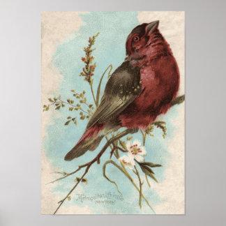 Impresión del pájaro del vintage póster