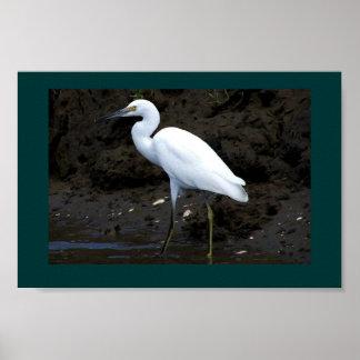 Impresión del pequeño Egret