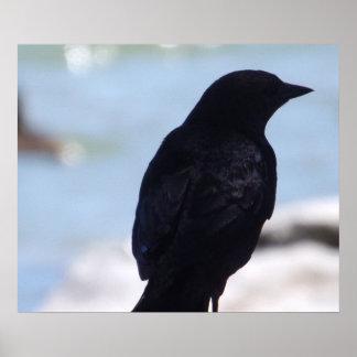 Impresión del perfil del cuervo póster